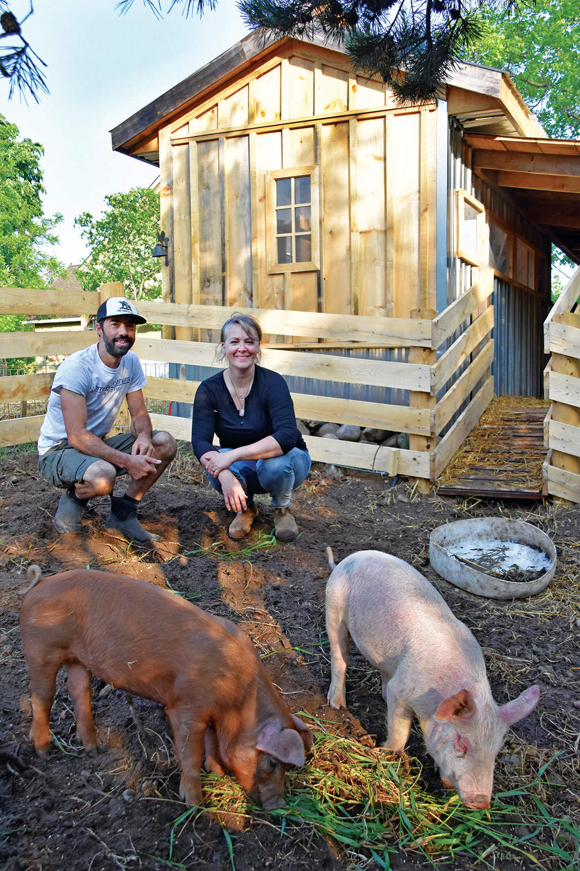 Going whole hog with backyard pigs, By Lisa Boonstoppel-Pot